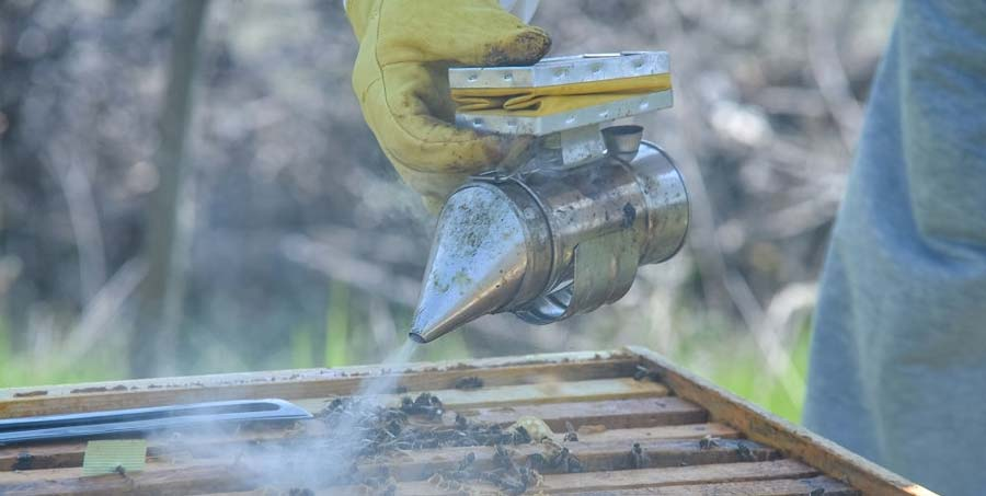 Bee smoker with apiarist