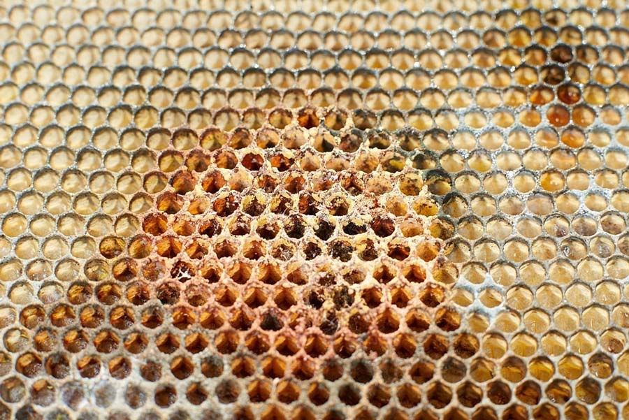 Mold on honeycomb