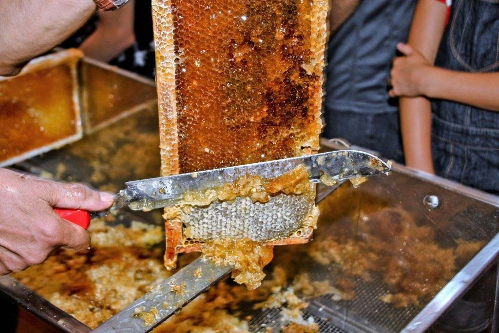 Uncapping honey from honey comb with knife